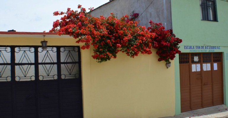 Street colour. San Cristobal de Las Casas.