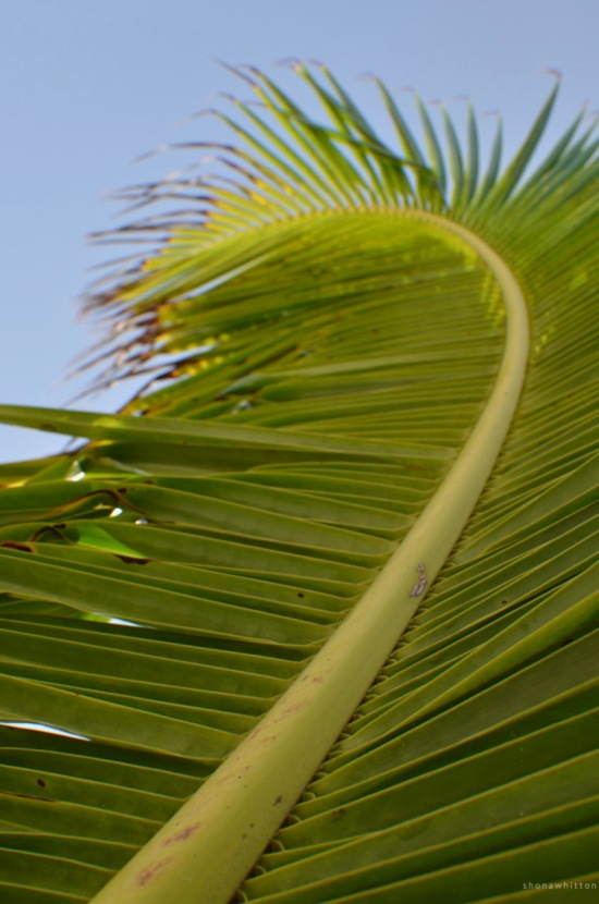 Palm detail, Tulum Beach, Mexico.