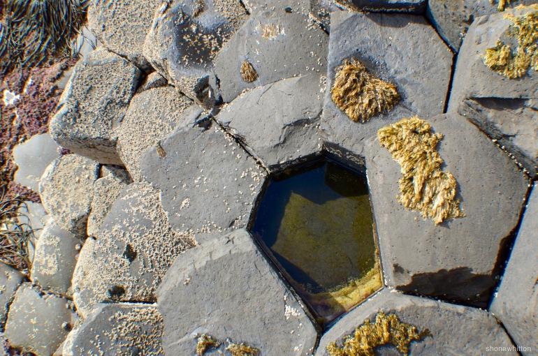 An hexagonal close up. Giant's Causeway, Northern  Ireland.